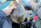 Морская рыба прыгнула в ущелье столб своего рыбака